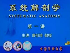 系统解剖学